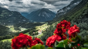 red flowers on the mountain under dark clouds
